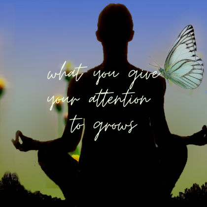 What You Give your Attention to Grows